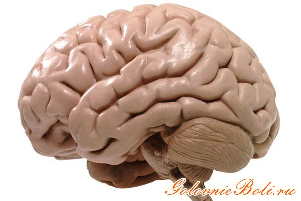 Иллюстрация мозга человека