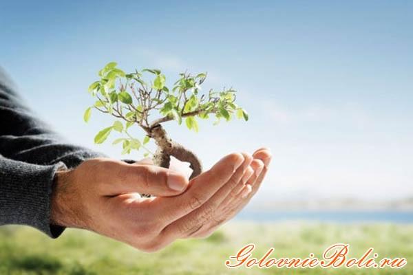 Проросшее дерево в руке