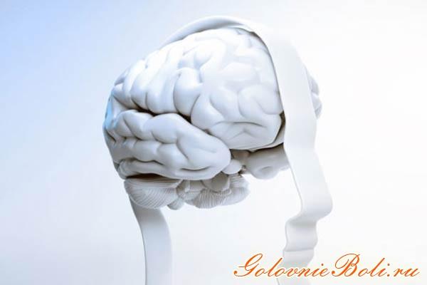 Головной мозг (3D изображение)